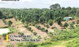 Bất động sản Đăk Nông | Mua bán nhà đất tốt nhất Đăk Nông